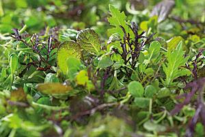 Top-Qualität bei Micro Leaf